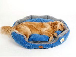 Best Dog Bed For Golden Retriever Dogware Space